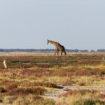 08.22.-24. – Etosha National Park – we completed our BIG FIVE